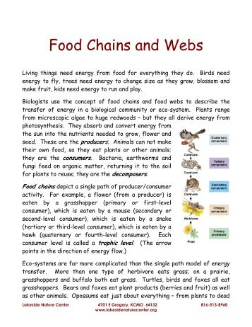 Environment - Food Chains And Webs - Lakeside Nature Center
