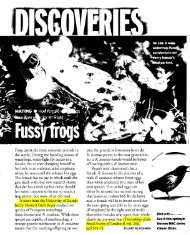 Frogs aren't thc most romantic animals in the world ... - uli-reyer.ch