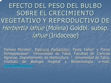 EFECTO DEL PESO DEL BULBO SOBRE EL CRECIMIENTO ...