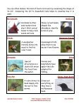 Why Are There So Many Beak Shapes? - Lakeside Nature Center - Page 2
