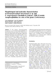 Morphological and molecular characterisation of Paranoplocephala ...