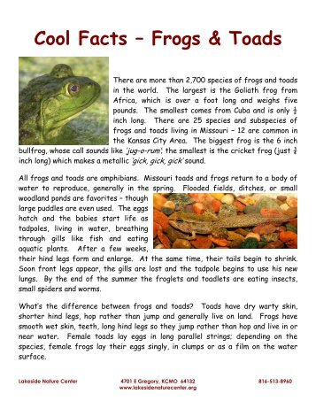 Cool Facts – Frogs & Toads - Lakeside Nature Center