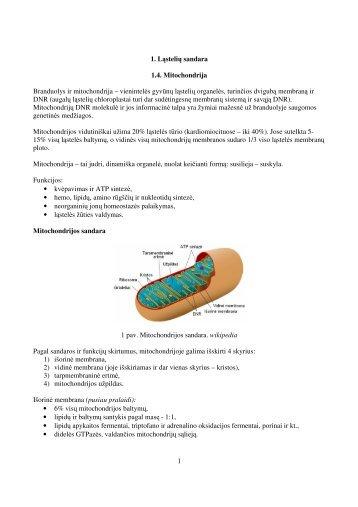 1 skyrius. Ląstelės sandara. Mitochondrijos