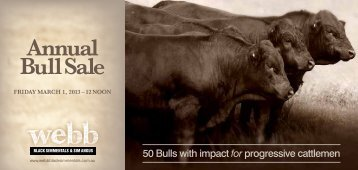 Annual Bull Sale - Webb Black Simmentals