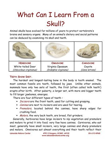 What Can I Learn From a Skull? - Lakeside Nature Center