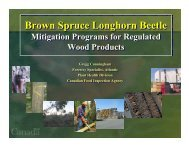 Brown Spruce Longhorn Beetle Brown Spruce Longhorn Beetle