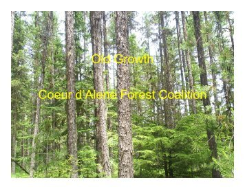 Old Growth Coeur d'Alene Forest Coalition - The Lands Council