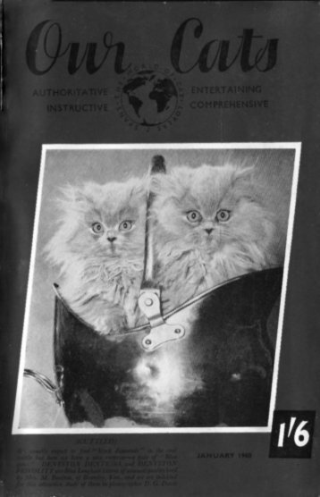 OUR CATS - Kyina & Talisker Cats Breeders of Russian Blues in ...