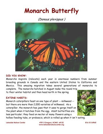 Monarch Butterfly - Lakeside Nature Center