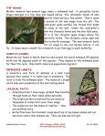 Monarch Butterfly - Lakeside Nature Center - Page 2