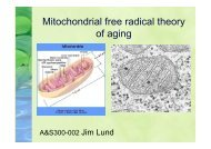 Mitochondrial free radical theory of aging