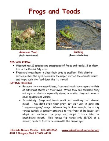 Frogs and Toads - Lakeside Nature Center