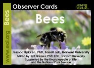 Bee Observer Cards - The Great Sunflower Project