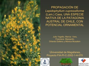 Propagación de Lepidophyllum cupressiforme