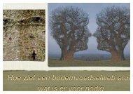 Verbeteren van diversiteit van bodemleven bij bomen, Bob Baars