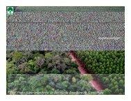 ii fórum do setor florestal do sudoeste ii fórum do setor florestal do ...