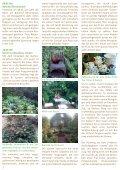 Mehr als nur Tulpen! - GartenKunstKreis - Page 2