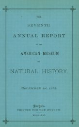 1874-1875 - American Museum of Natural History