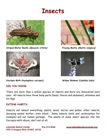 Insects - Lakeside Nature Center