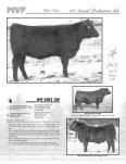 13thAnnual Production Sale - AngusWebmail.ca - Page 7
