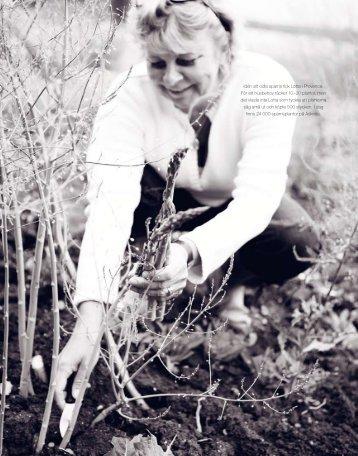 Idén att odla sparris fick Lotta i Provence. För ett ... - Anna Wendt