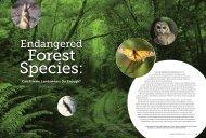 Endangered Forest Species - Jane Braxton Little-Dyerpress