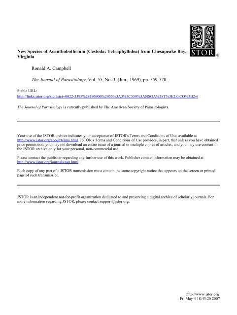 New Species of Acanthobothrium (Cestoda: Tetraphyllidea) from ...