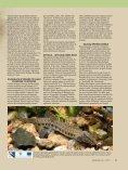 saugomos žuvys Lietuvoje - Natura2000 - Page 2