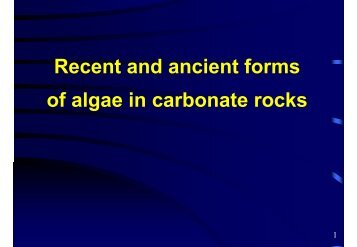 Algal fossils in carbonate rocks