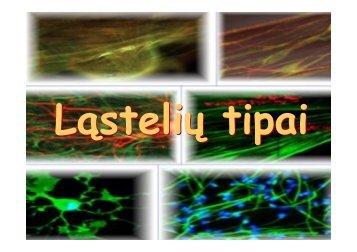Ląstelių tipai