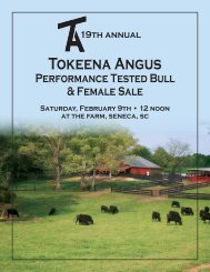 Tokeena angus, SeneCa, SC - Brubaker Sales and Marketing