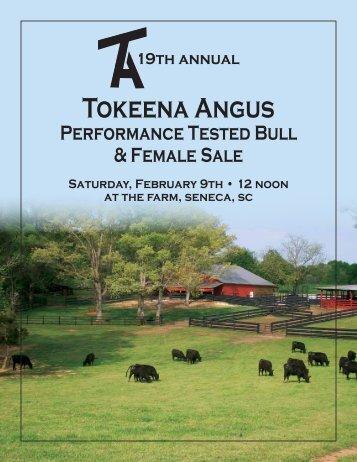 Tokeena angus, SeneCa, SC - Brubaker Sales and Marketing