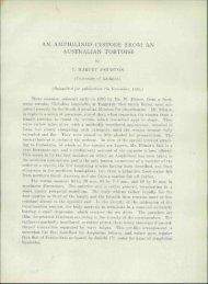 AN AMPHILINID CESTODE FROM AN AUSTRALIAN TORTOISE