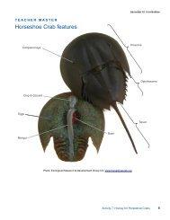 Horseshoe Crab features - Estuaries NOAA
