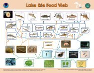 Lake Erie Food Web (748 KB) - Estuaries NOAA