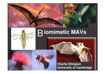 iomimetic MAVs - eroMAV