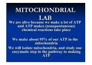 MITOCHONDRIAL LAB
