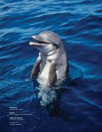 Report on Captive Dolphins - Page 2