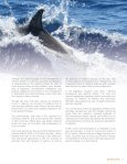 Report on Captive Dolphins - Page 7