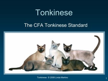 Tonkinese Standard - Tonkinese Breed Association