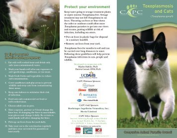 Toxoplasmosis and Cats