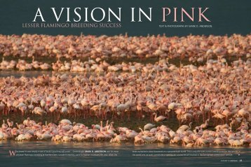 a vision in pink
