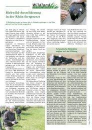 Birkwild-Auswilderung in der Rhön fortgesetzt