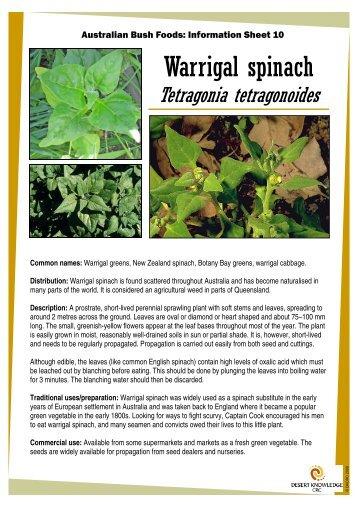 Australian Bush Foods: Information Sheet 10 Warrigal ... - Ninti One