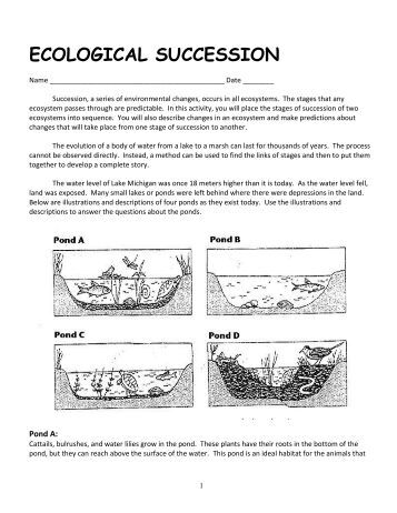 Printables Ecology Worksheets For High School ecology worksheets for high school with answers intrepidpath ecological succession worksheet worksheets