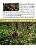 Vogelschutz-Sonderheft Rainer Wald - Der Rainer Wald - Seite 6