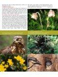Vogelschutz-Sonderheft Rainer Wald - Der Rainer Wald - Seite 7