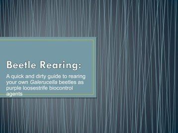 Beetle Rearing: - cisma