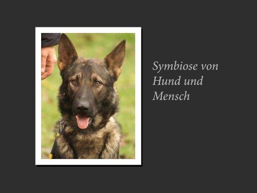 Symbiose von Hund und Mensch