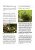 Azores - Page 2